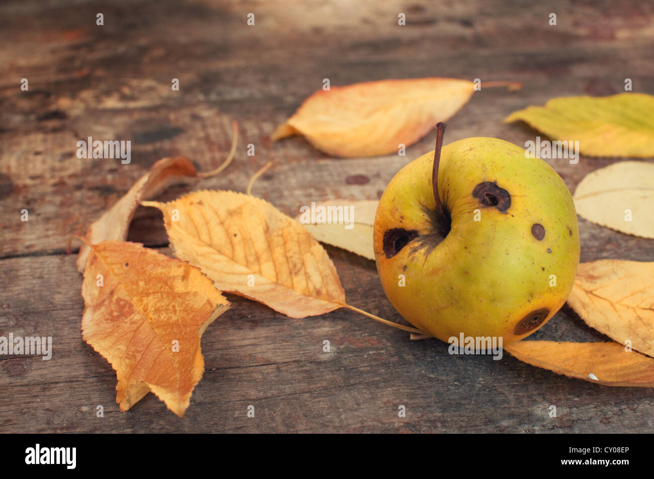 Autumn leaves fallen on the old wooden table and a rotten apple Stock Photo
