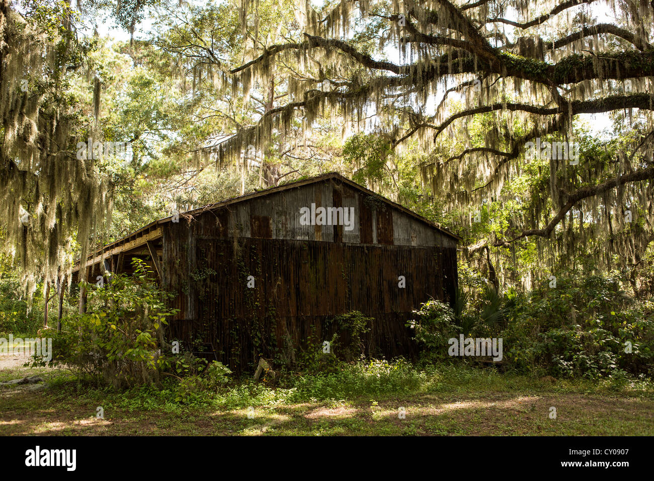 An old shed among live oak trees with spanish moss at Honey Horn Plantation on Hilton Head Island, SC - Stock Image
