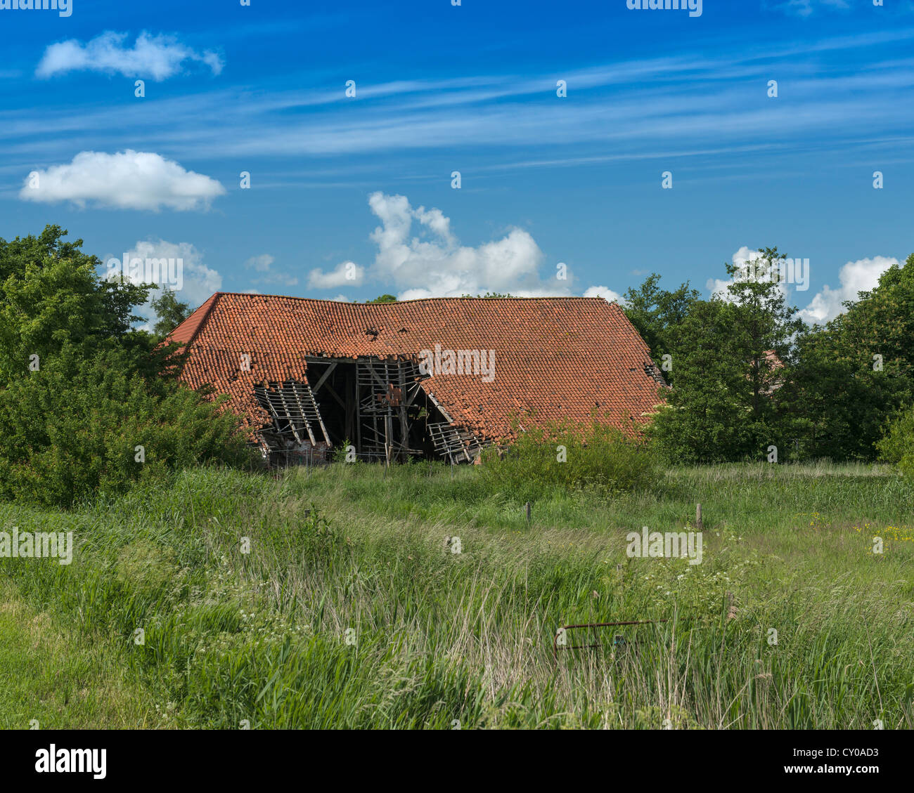 Old bard with partially collapsed roof, former Gulfhof, East Frisian building near Hinte, East Frisia, Lower Saxony - Stock Image