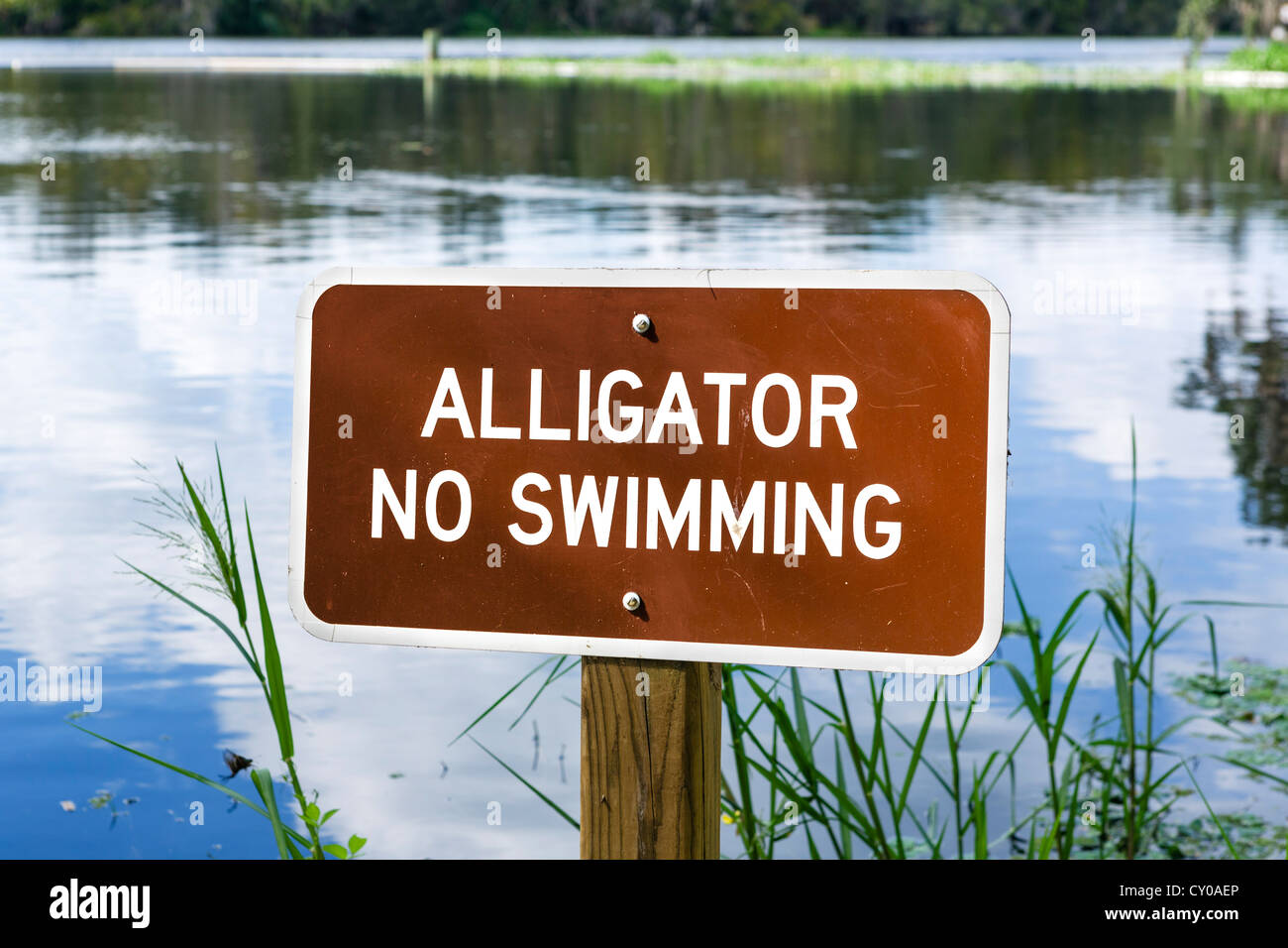 No Swimming because of Alligators sign, Blue Spring Run, St Johns River, Blue Spring State Park, Florida, USA Stock Photo