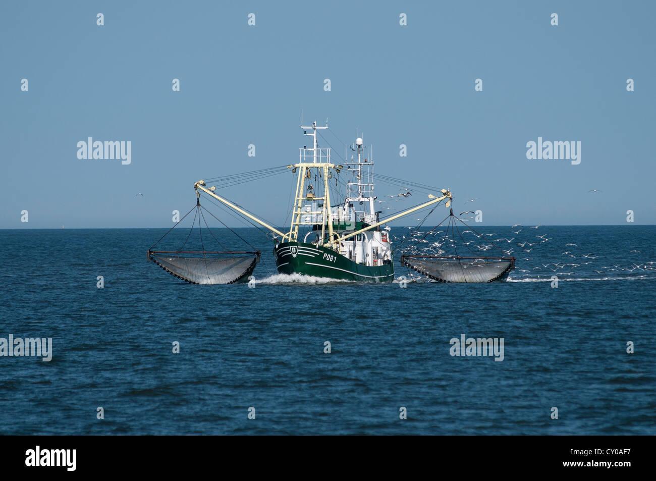 'Jan aus Ditzum' shrimp boat hauling in her nets, followed by a flock of seagulls, Lower Saxony Wadden Sea - Stock Image