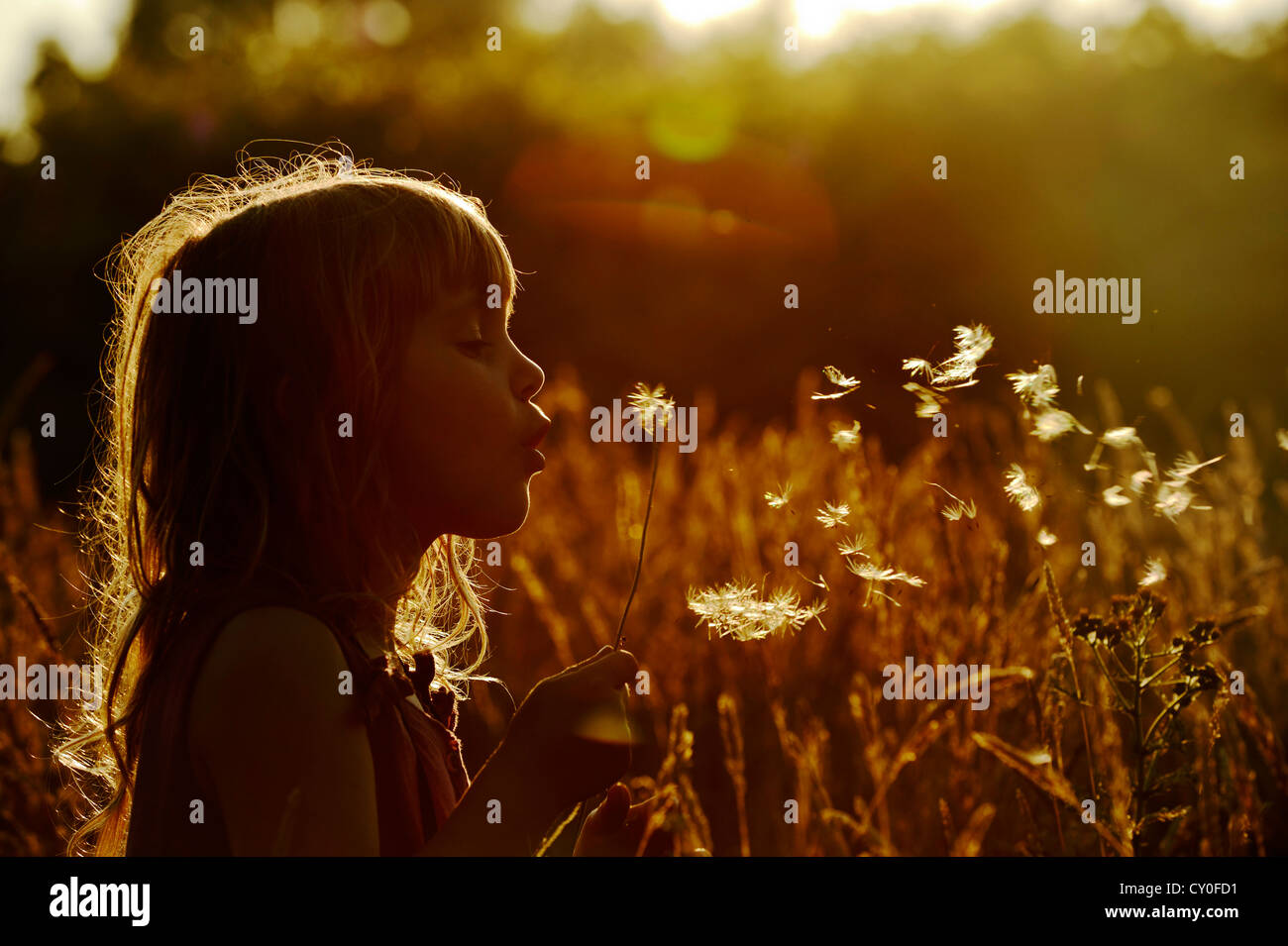 Young girl playing in meadow in late summer Norfolk - Model Released - Stock Image