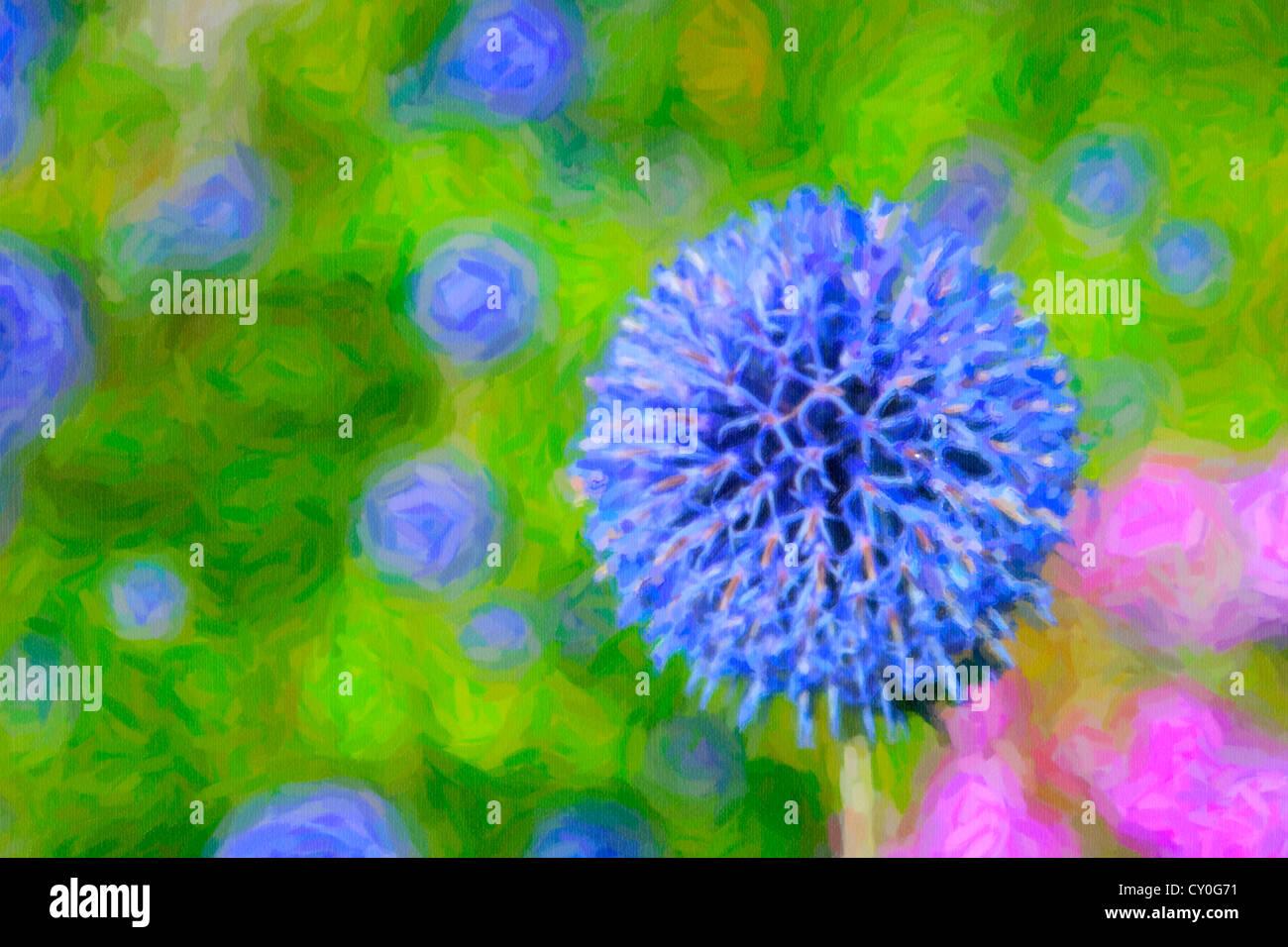 Flowering globe thistle in the summer garden. - Stock Image