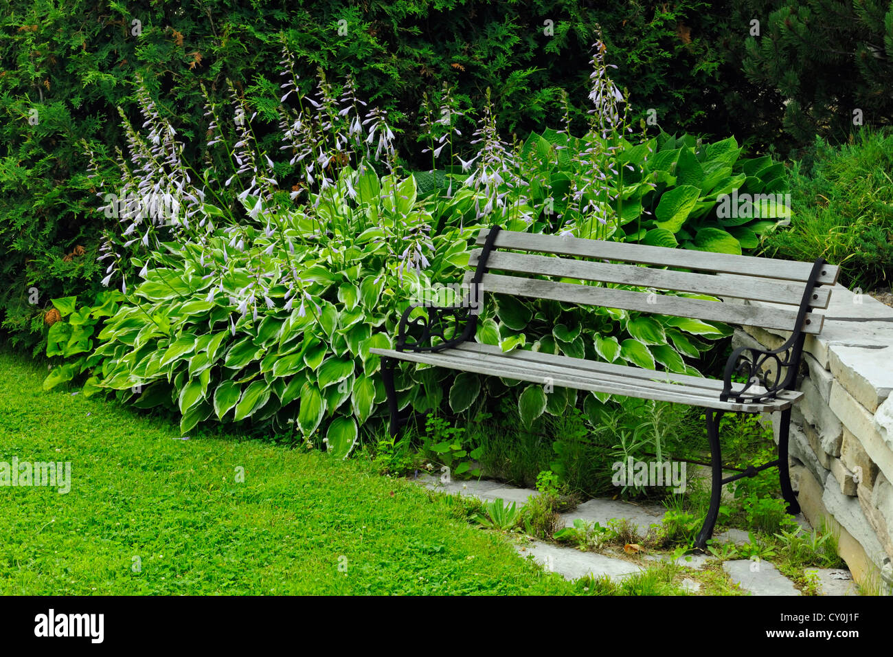 Cool Variegated Hosta And Garden Bench Greater Sudbury Ontario Pdpeps Interior Chair Design Pdpepsorg