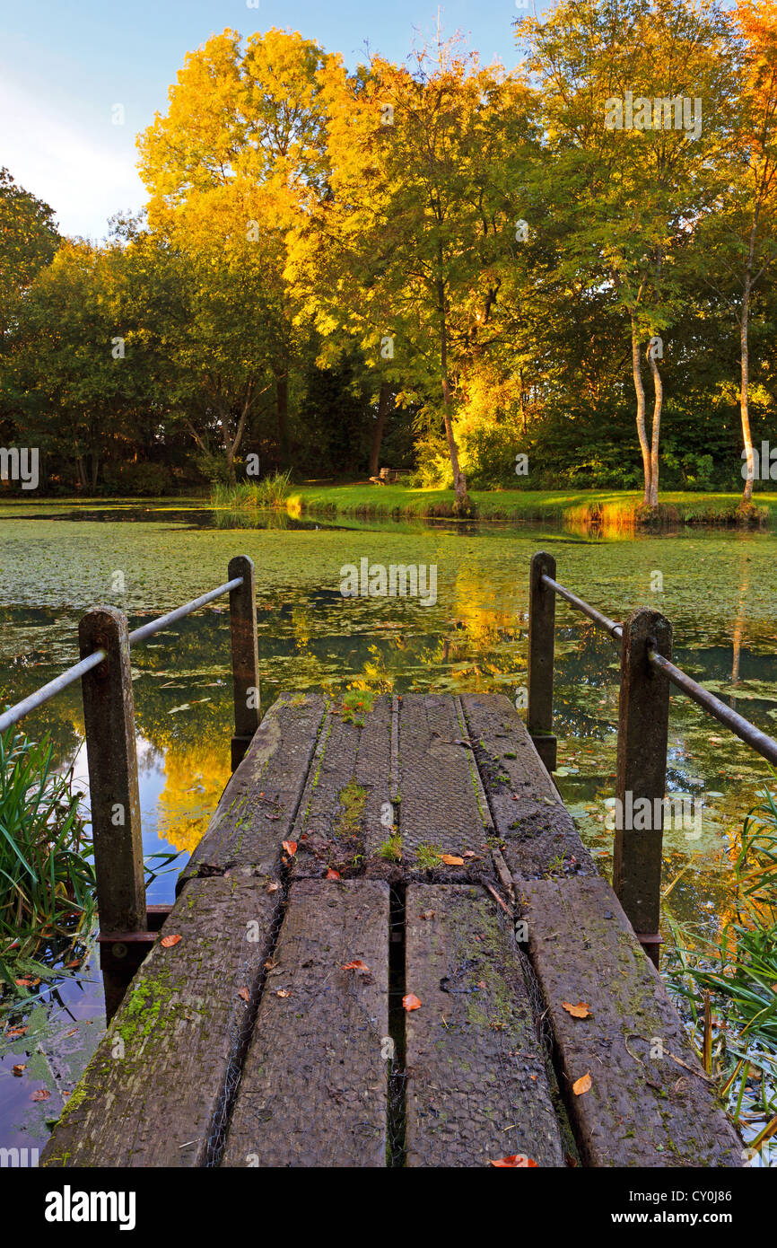 Photo of a small wooden jetty on Swelling Hill pond in Hampshire England - Stock Image