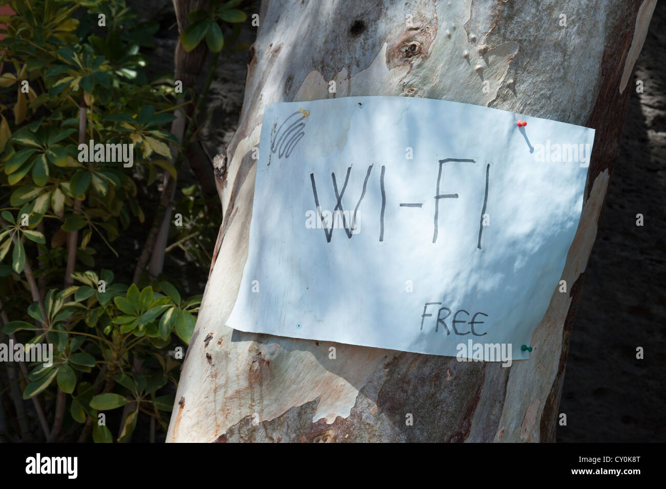 Hand written wi-fi sign pinned to a tree - Stock Image
