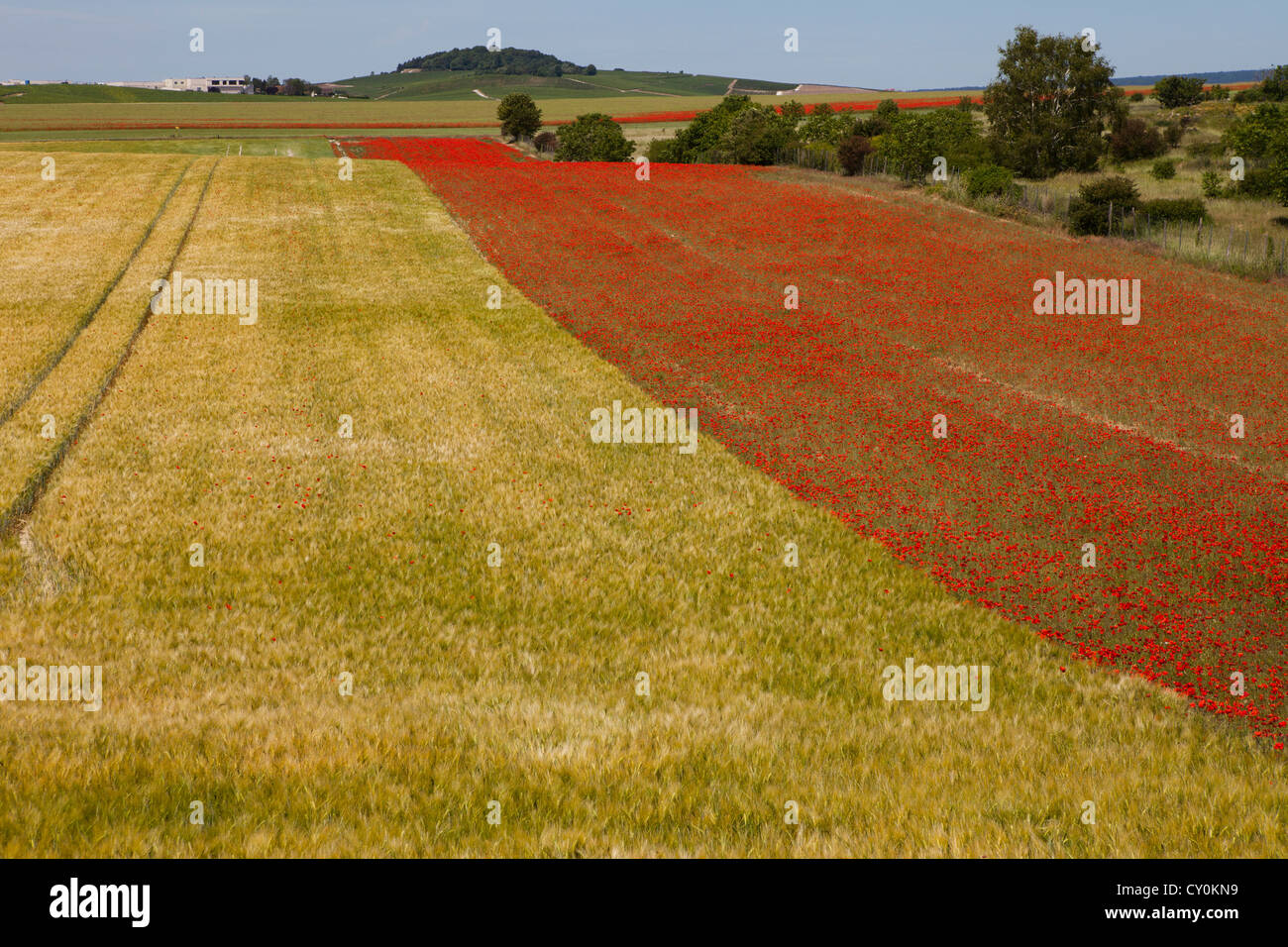 grain production in France - Stock Image