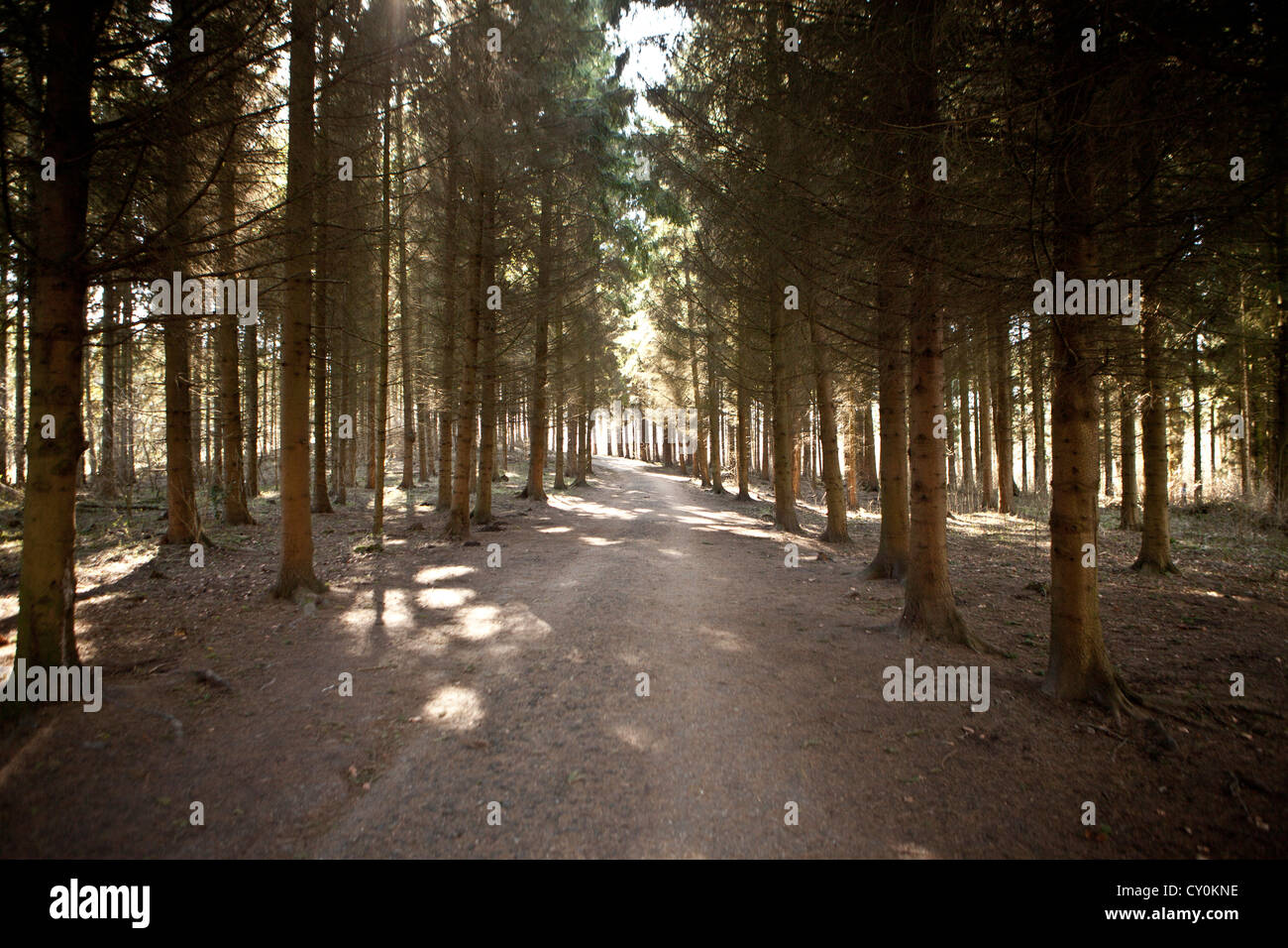 Amsterdam forest in spring - Stock Image