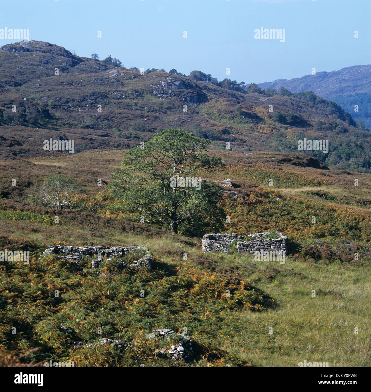 Derelict crofting community on the banks of Loch Moidart among autumnal colours and bracken - Stock Image