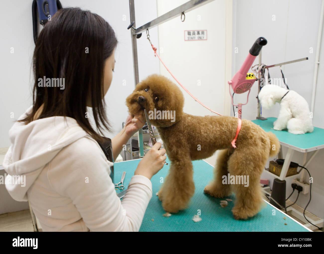 dogtrim salon in Hongkong - Stock Image