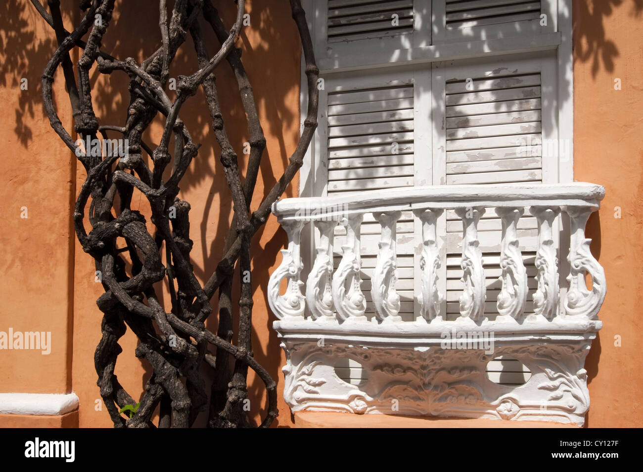 window & plant stems Barrio San Diego Cartagena de Indias Colombia - Stock Image