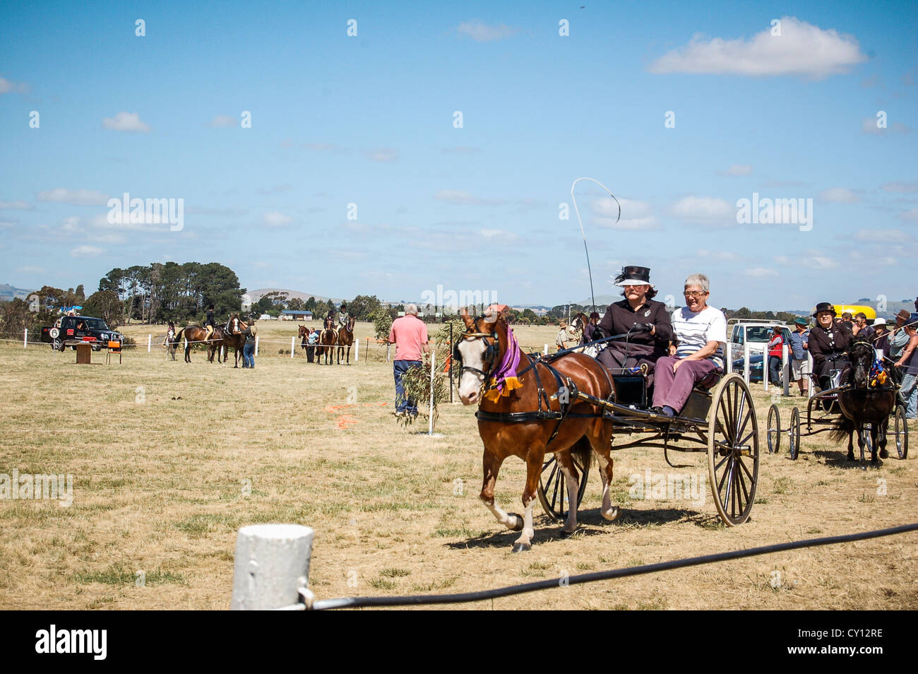Horses and carts in competition at annual Clunes Show in rural town of Clunes, Country Victoria, Australia. - Stock Image