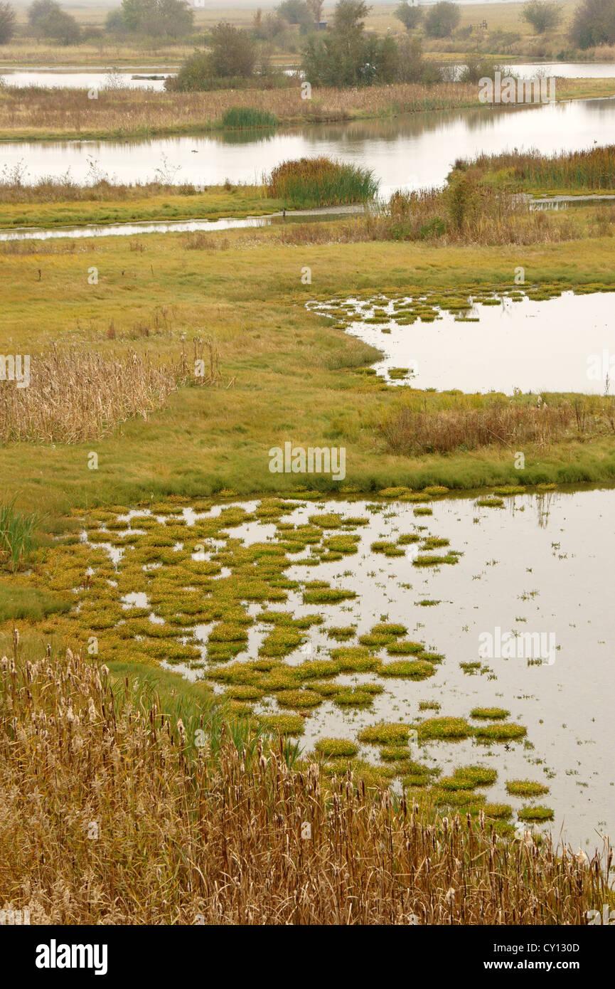 Wetlands or estuarine marsh at the Reifel migratory Bird Sanctuary, Westham Island, Delta, BC, Canada - Stock Image