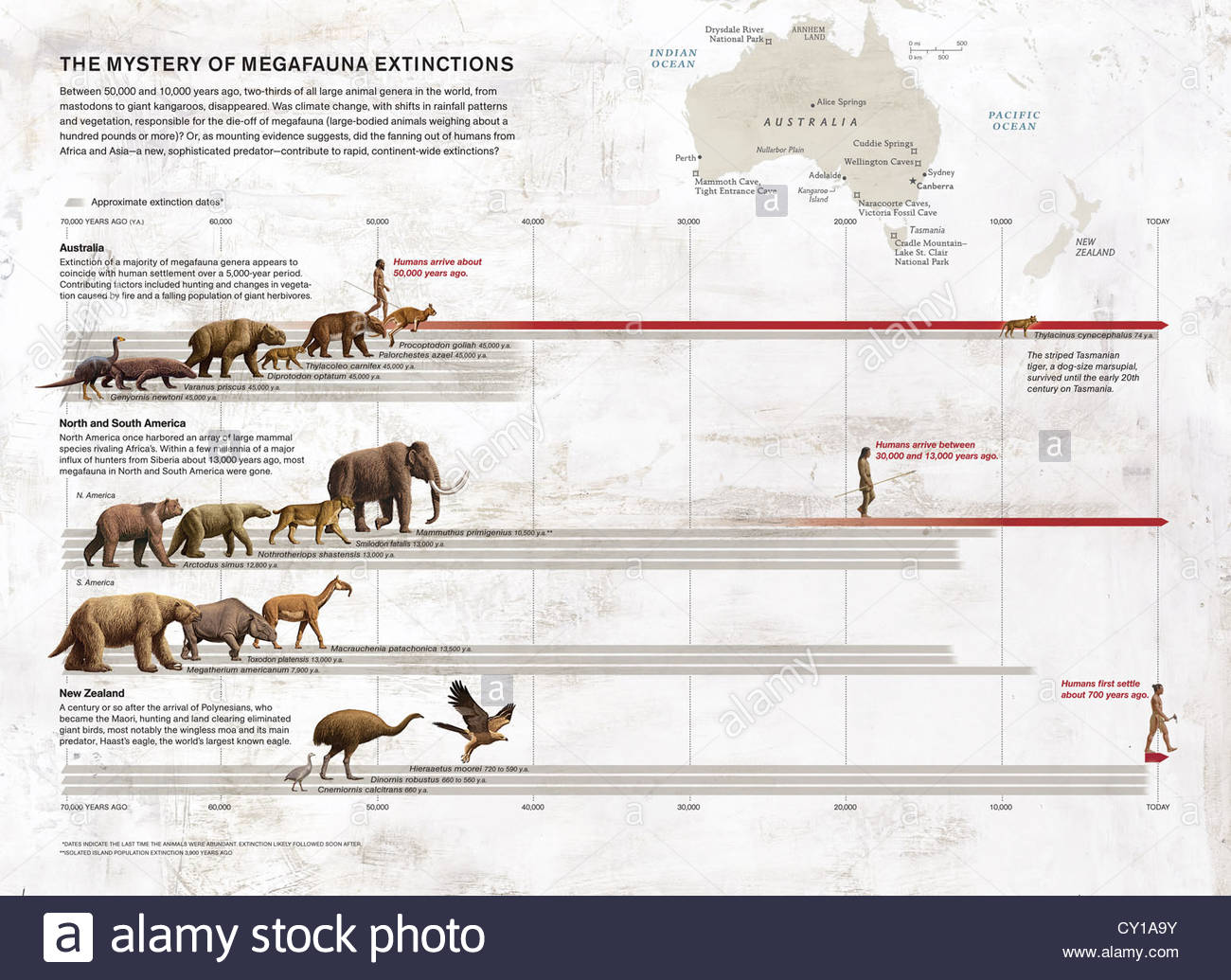 the possible causes of the australian megafauna extinctions at the end of the pleistocene The late pleistocene extinction event saw the extinction of many mammals weighing more than 40 kg the proportional rate of megafauna extinctions is consecutively larger the greater the human migratory distance from africa.
