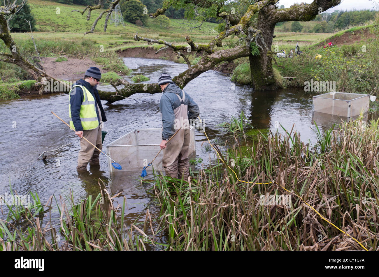 Two scientists sample 1m squared quadrats for Lampreys in the Blane Water river,  Scotland using electric fishing - Stock Image