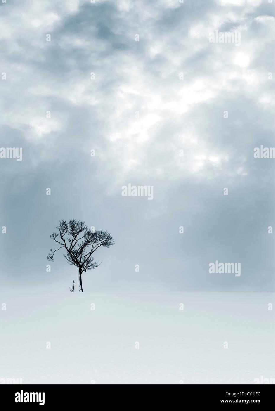 Solitary tree in snowy bleak landscape - Stock Image