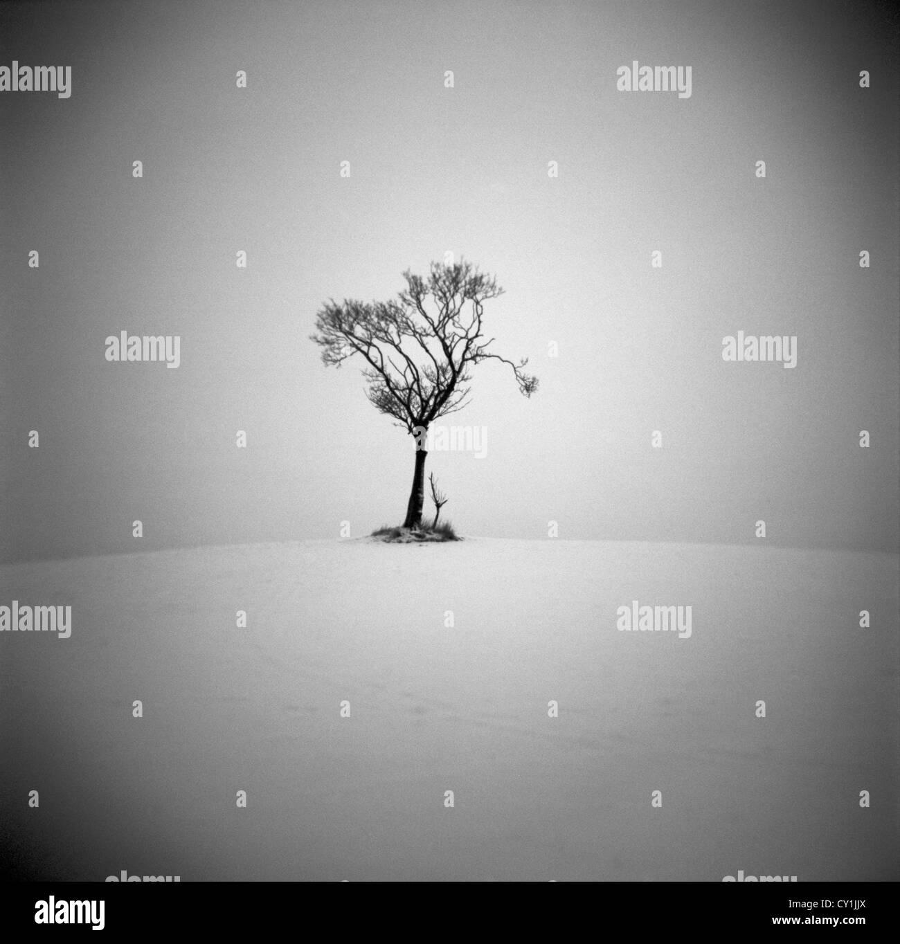 Lone tree in desert like environment - Stock Image