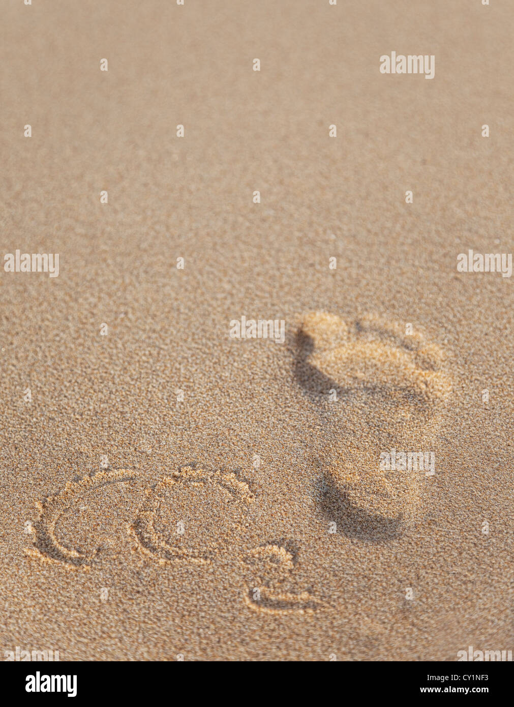 Carbon footprint concept - Stock Image