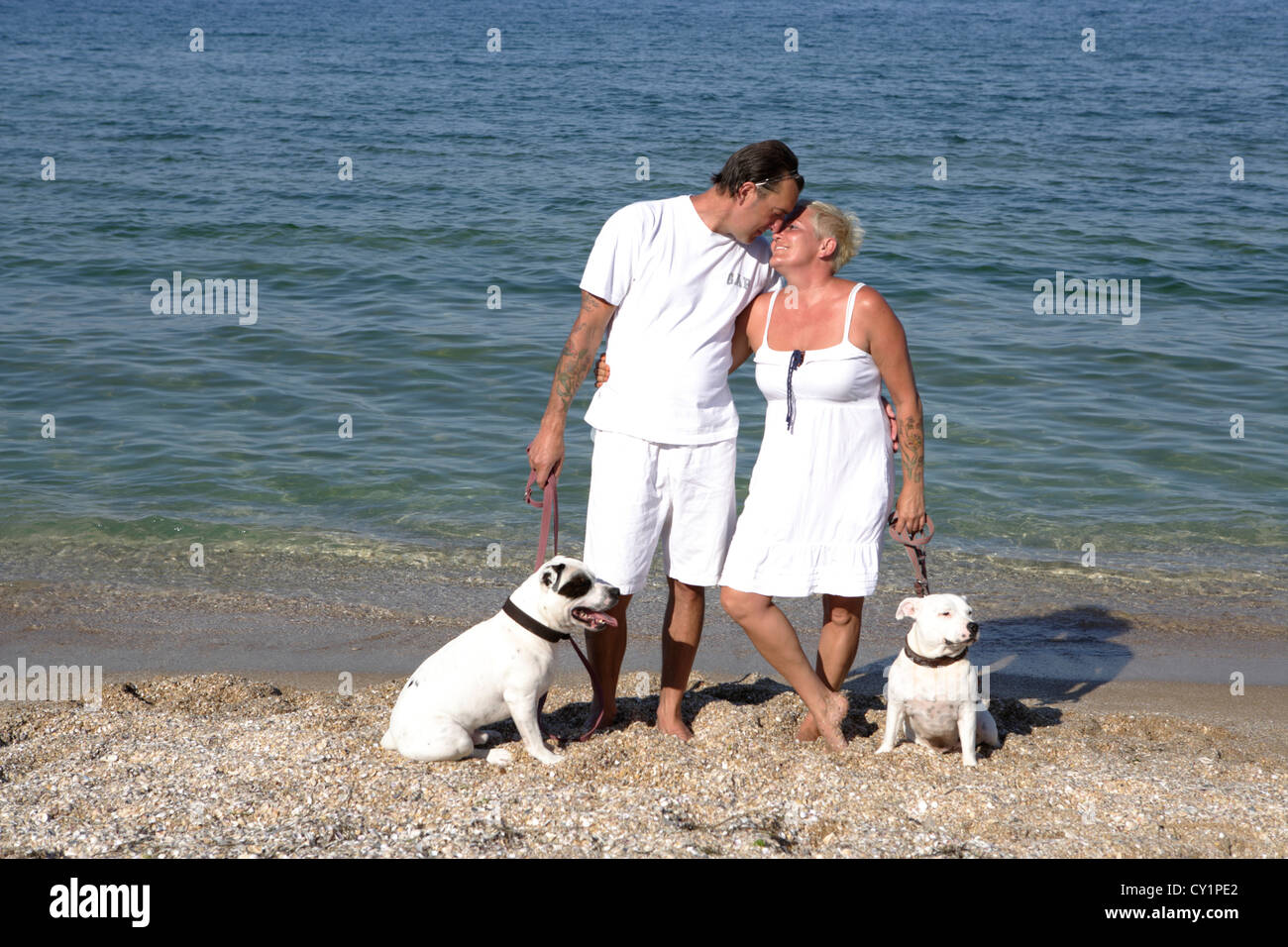 couple dogs Staffordshire Bull Terrier - Stock Image