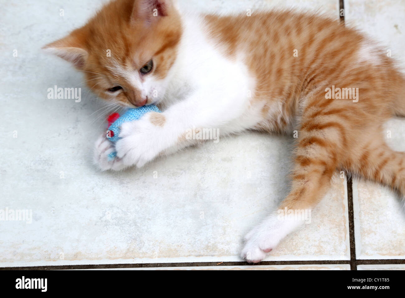 Ginger And White Kitten Playing With Toy Mouse Stock Photo