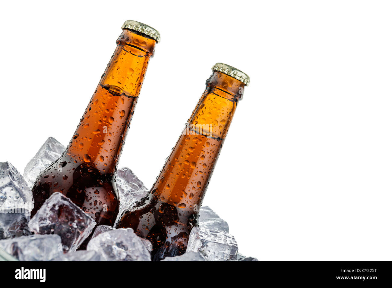 beers on ice with copy space isolated on white background - Stock Image