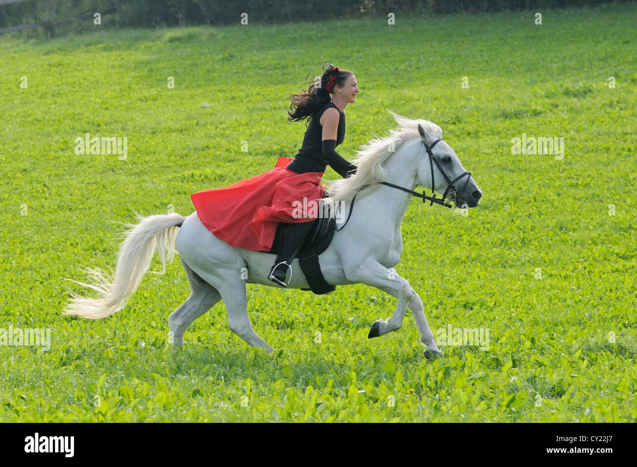 Rider wearing a 'Spanish' dress on back of a white Connemara pony stallion - Stock Image