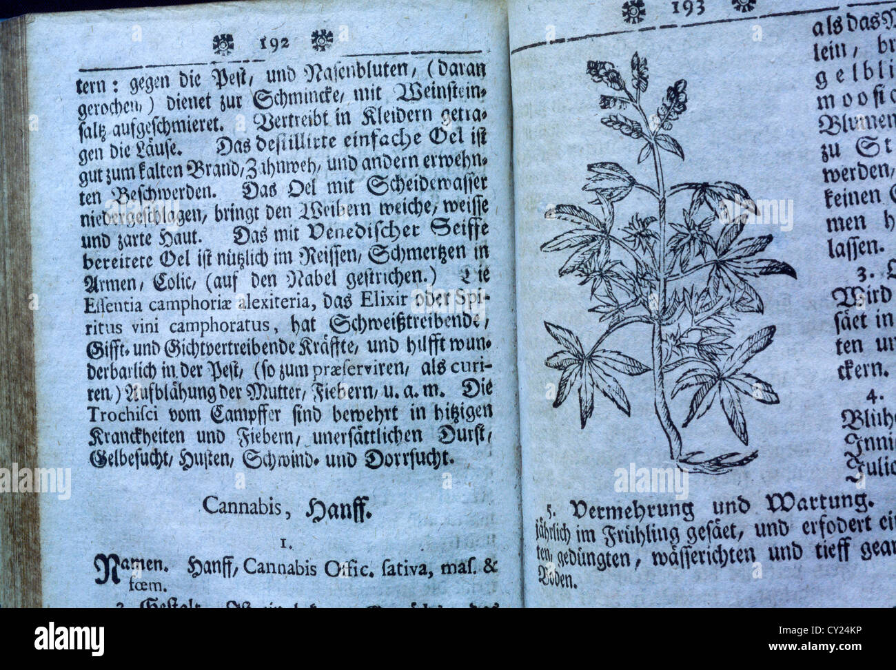 'Botanicus' old book by Curioser. Page about cannabis plant. - Stock Image