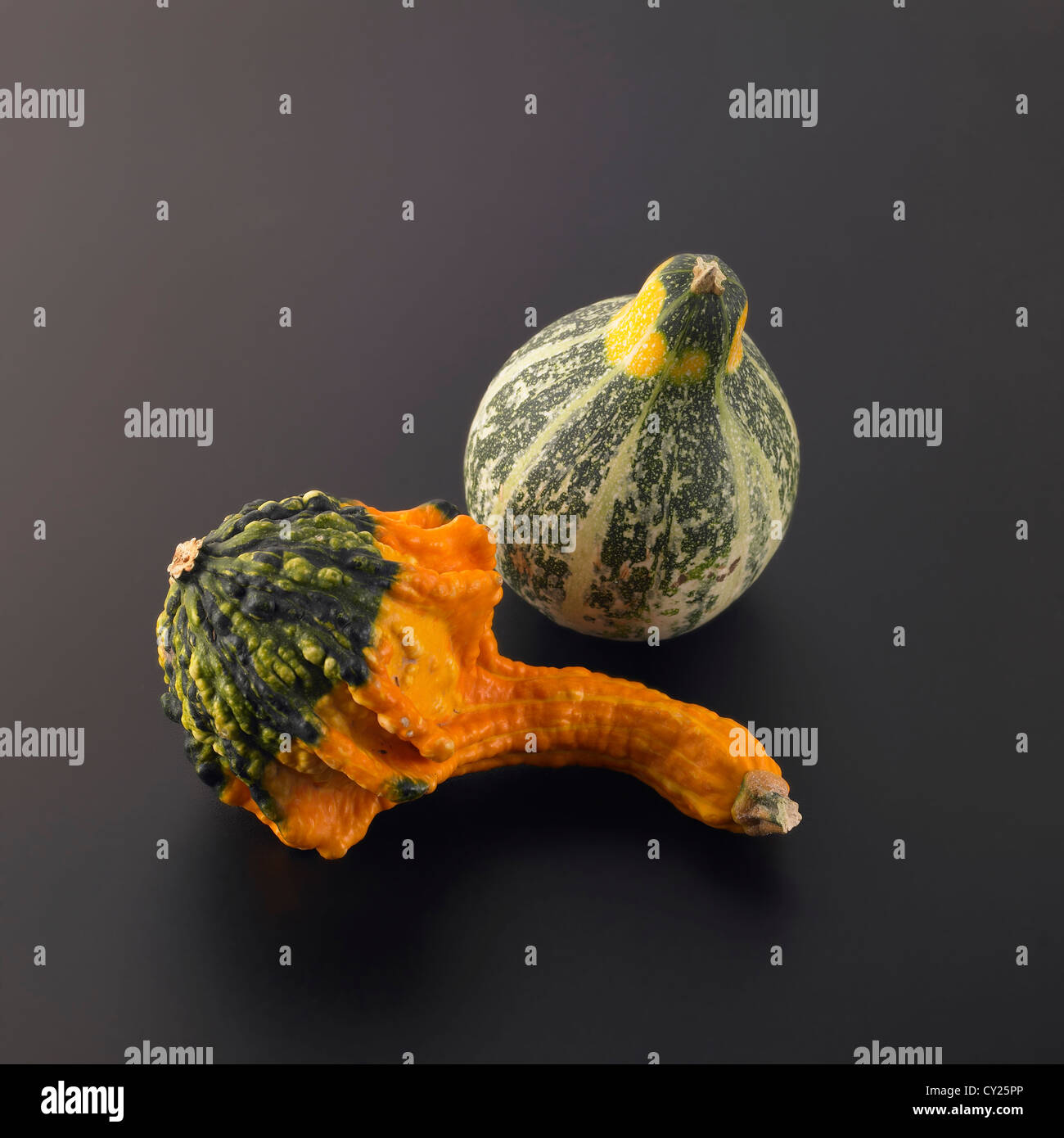 Ornamental gourds on a grey background - Stock Image