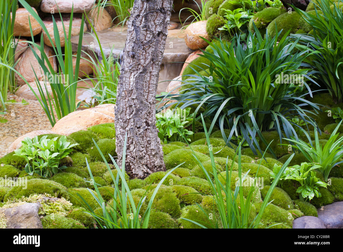 Planting in Japanese moss garden, Satoyama Life, Chelse Flower Show 2012 Stock Photo