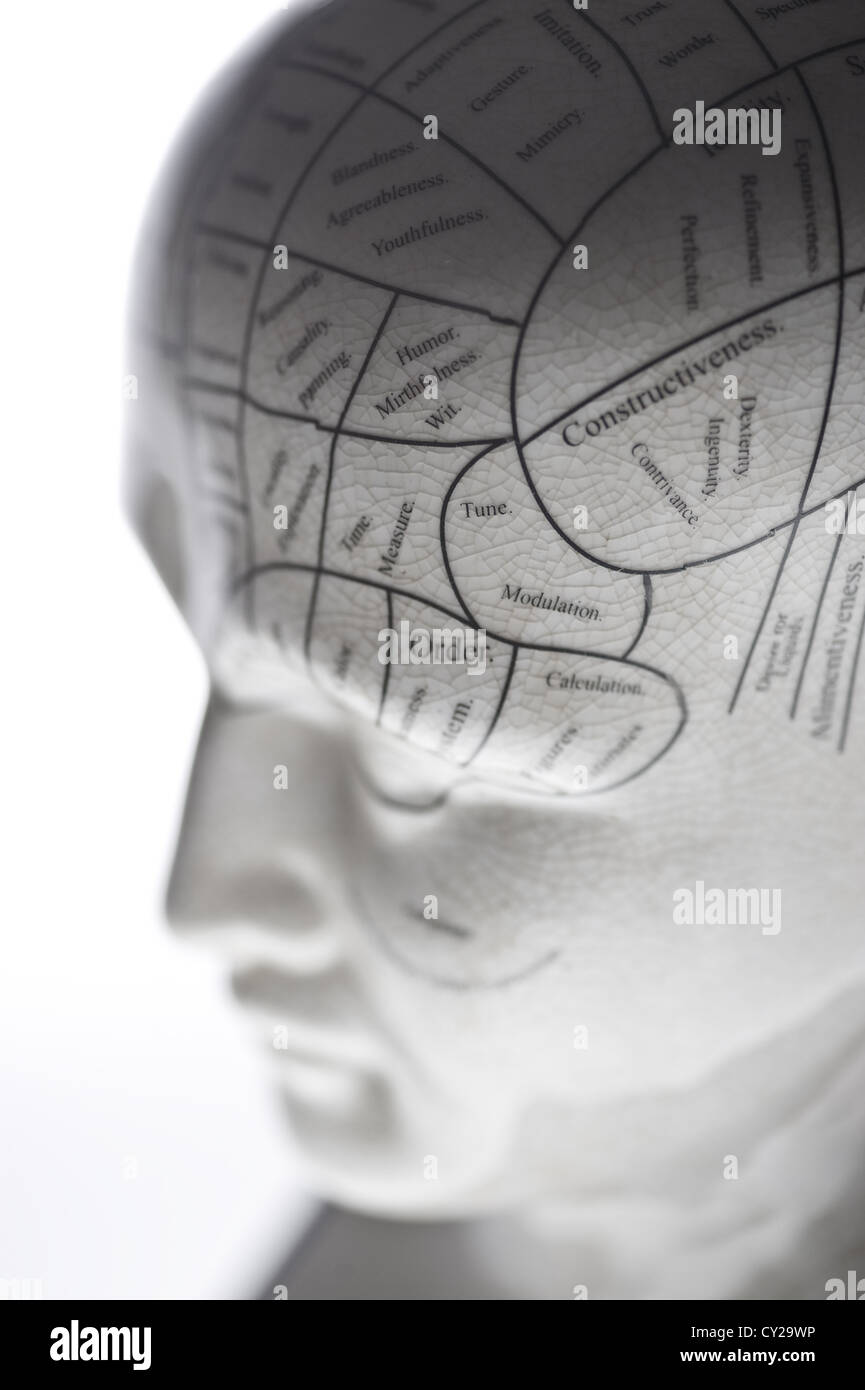 A photograph of a phrenology model. - Stock Image