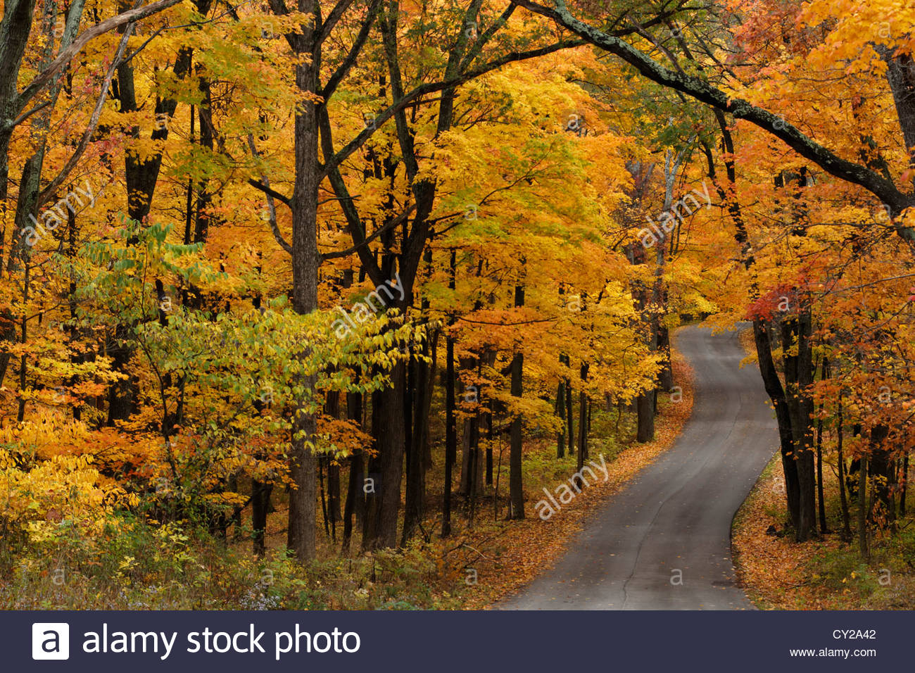 Autumn curvey road in Brown County Indiana - Stock Image