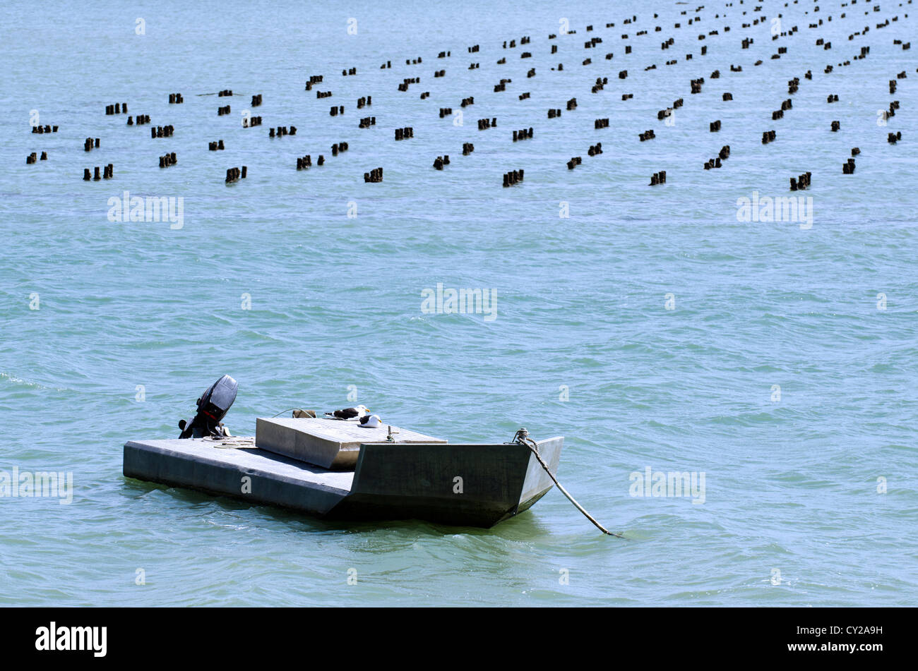 Flat fishing boat in Oyster farm in Northland New Zealand. - Stock Image