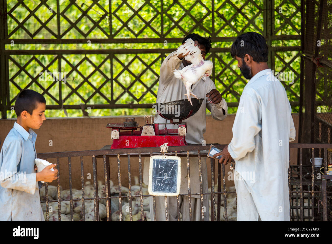 Live chicken vendor, Sunday Market, Islamabad, Pakistan - Stock Image