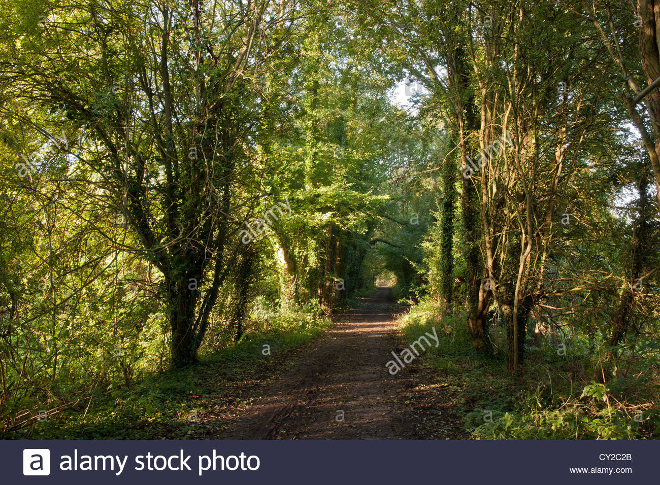 disused railway line public footpath bridleway walking cycle cycling rural country green road hollow covered leafy - Stock Image