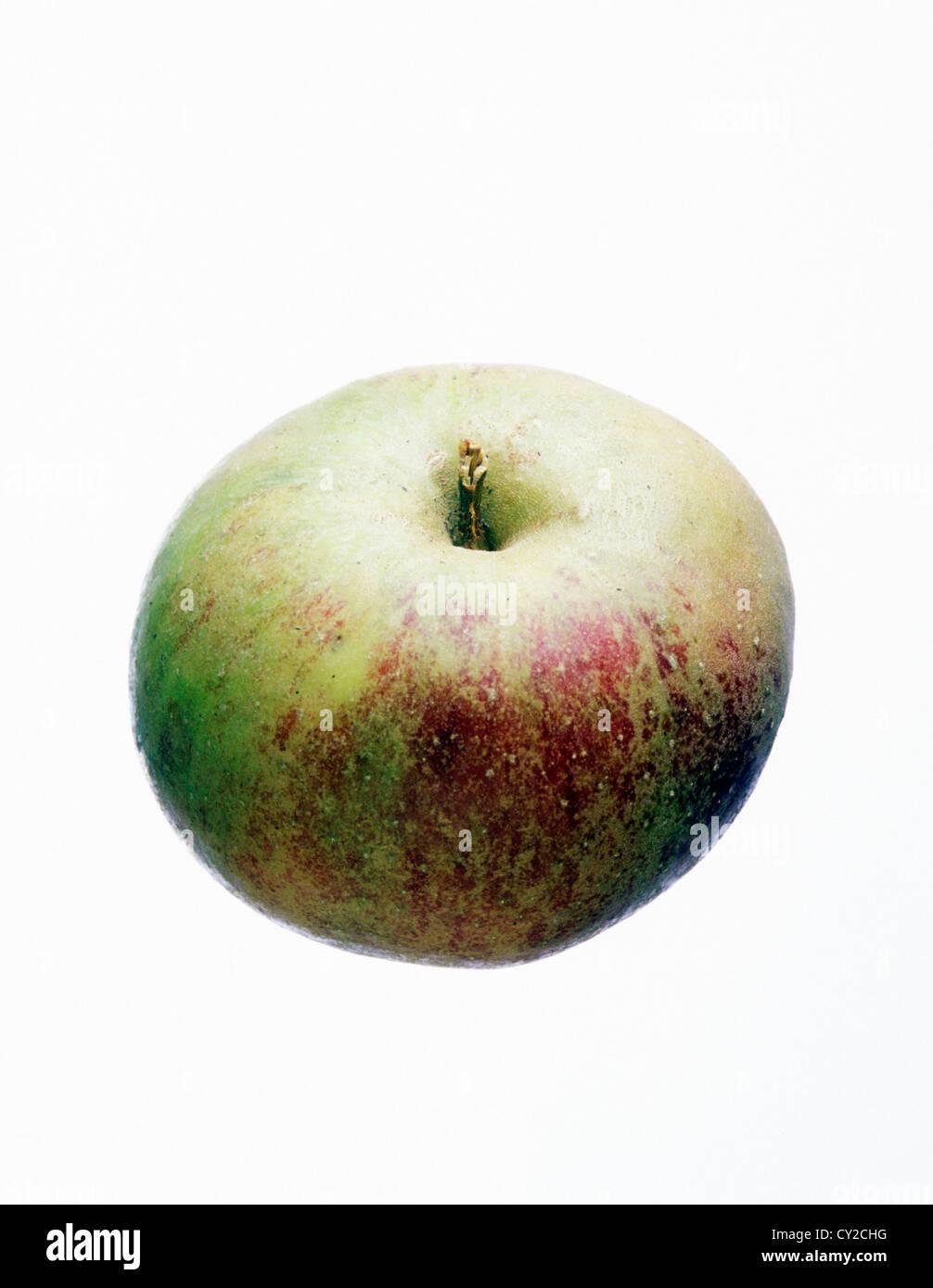 Cox apple, UK apple. - Stock Image