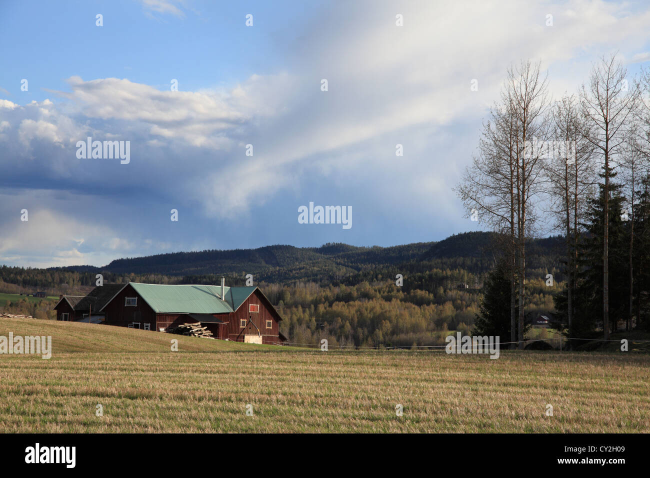 Swedish farm houses on a fine spring afternoon. Valley of river Angermanaelv, Vaesternorrland, Sweden - Stock Image