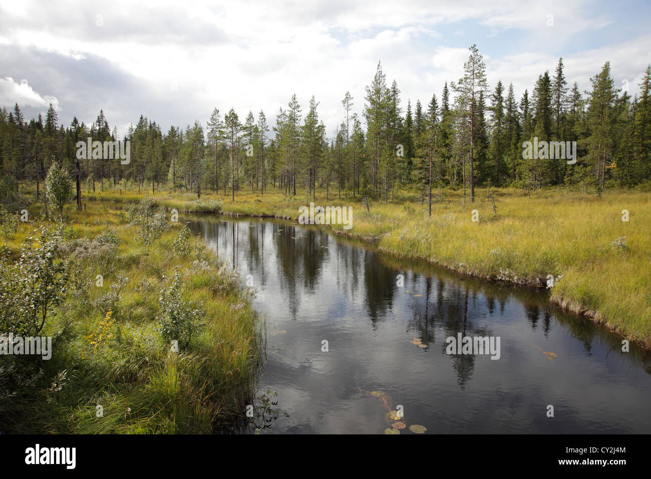 A river winds through a softwood forest on a fine day in early fall. Anundsjö in northern Sweden. - Stock Image