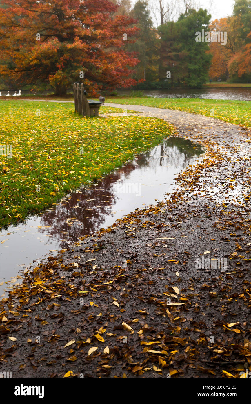 puddle on the path in deep autumn - Stock Image