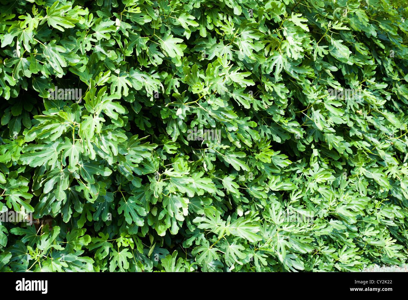 Garden Wall Covering Stock Photos Garden Wall Covering Stock