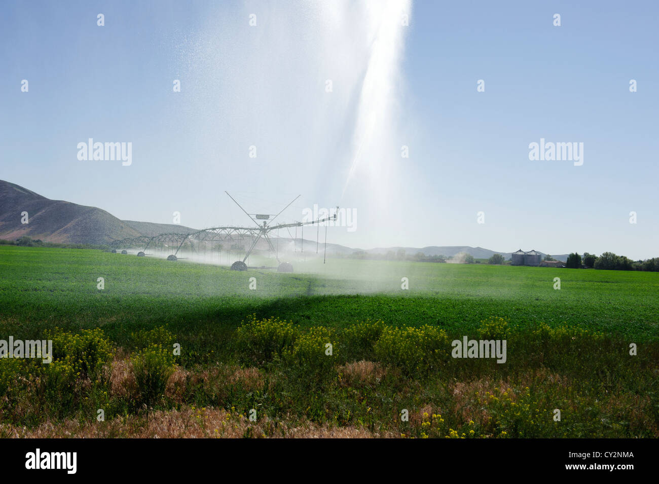 Irrigation pivot in an Alfalfa field in Southern Idaho, with the late afternoon sun illuminating the water - Stock Image