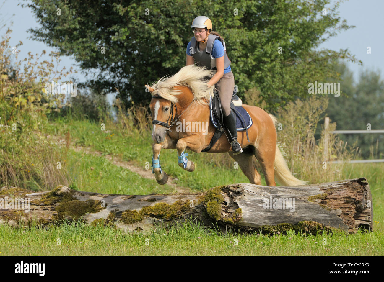 Entry level cross country training (Haflinger horse) - Stock Image