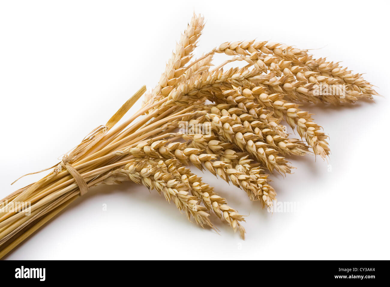 Cereal and wheat spike on bright background - Stock Image