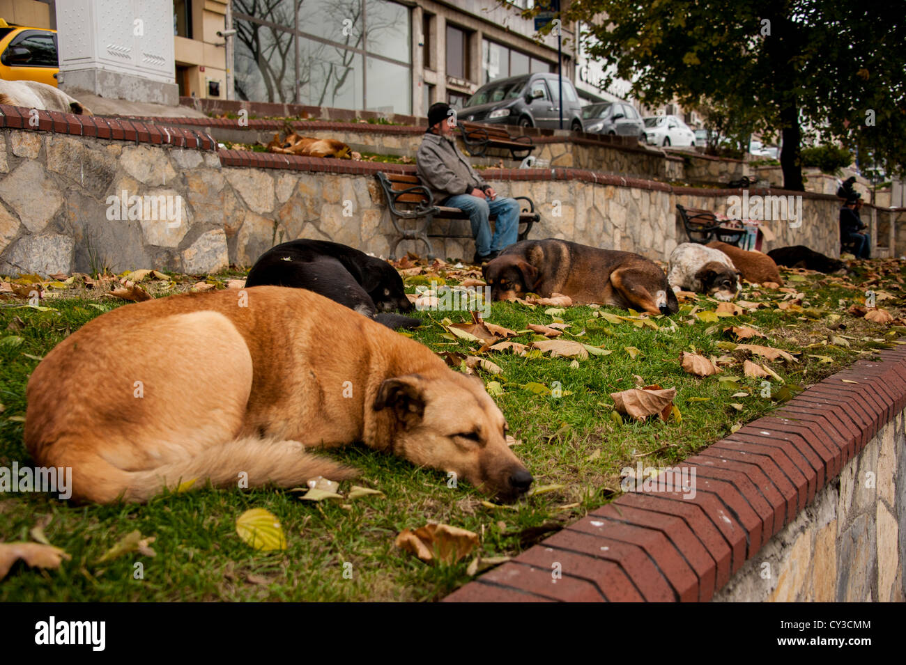 Homeless dogs in Istanbul, Turkey - Stock Image