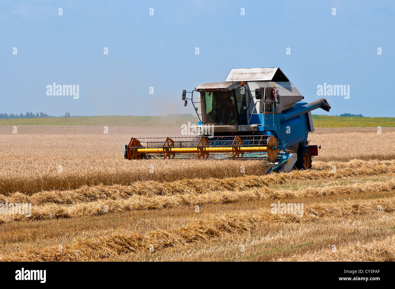 Combine harvester working a wheat field - Stock Image