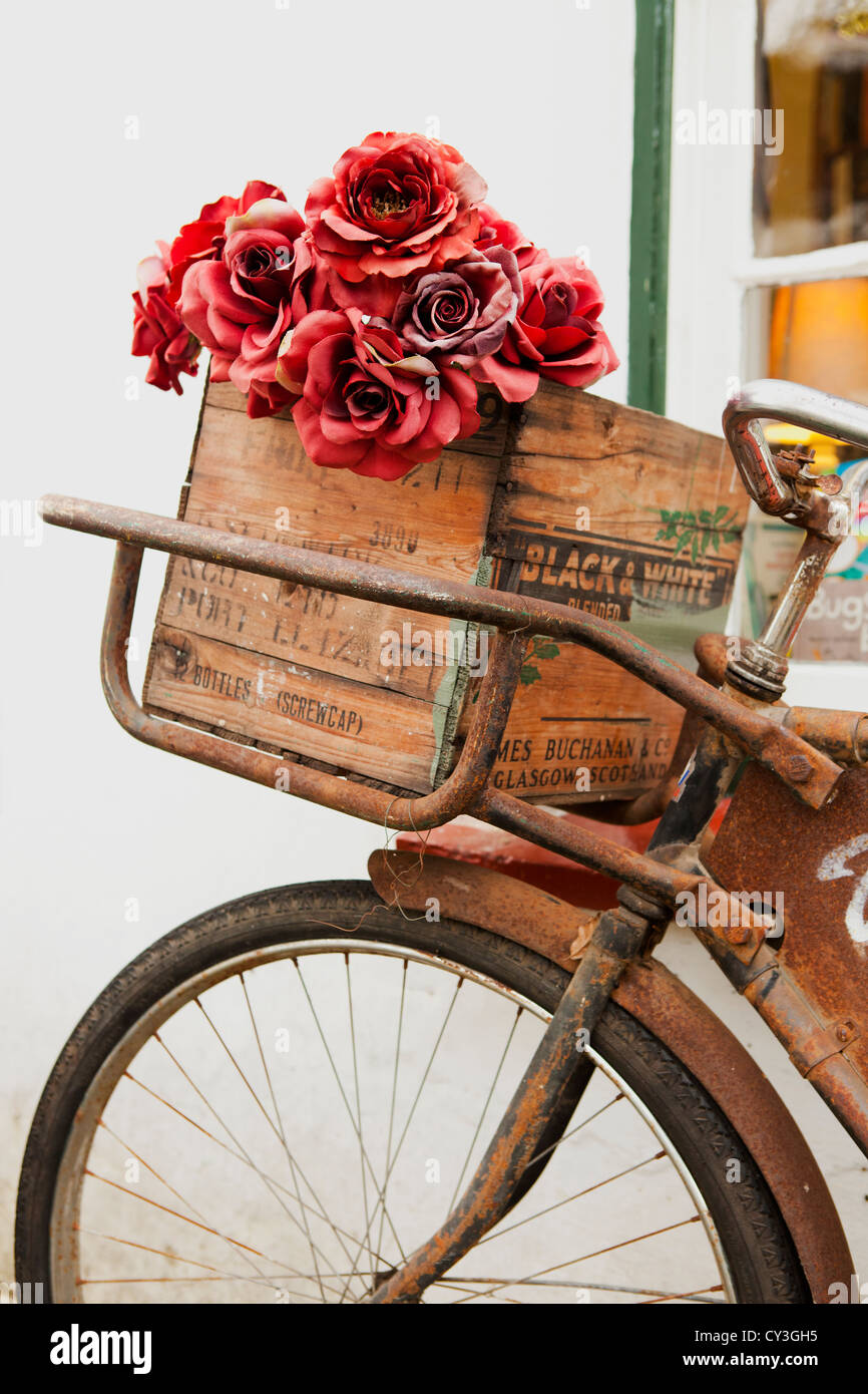 Old rusty bicycle with red artificial roses in wooden basket. - Stock Image