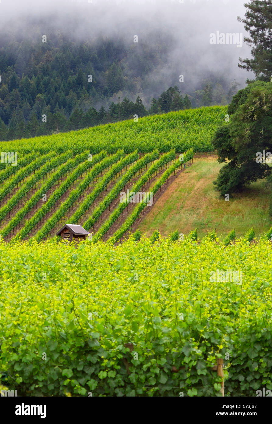 Vineyard views of the Anderson Valley wine country in Northern California. - Stock Image