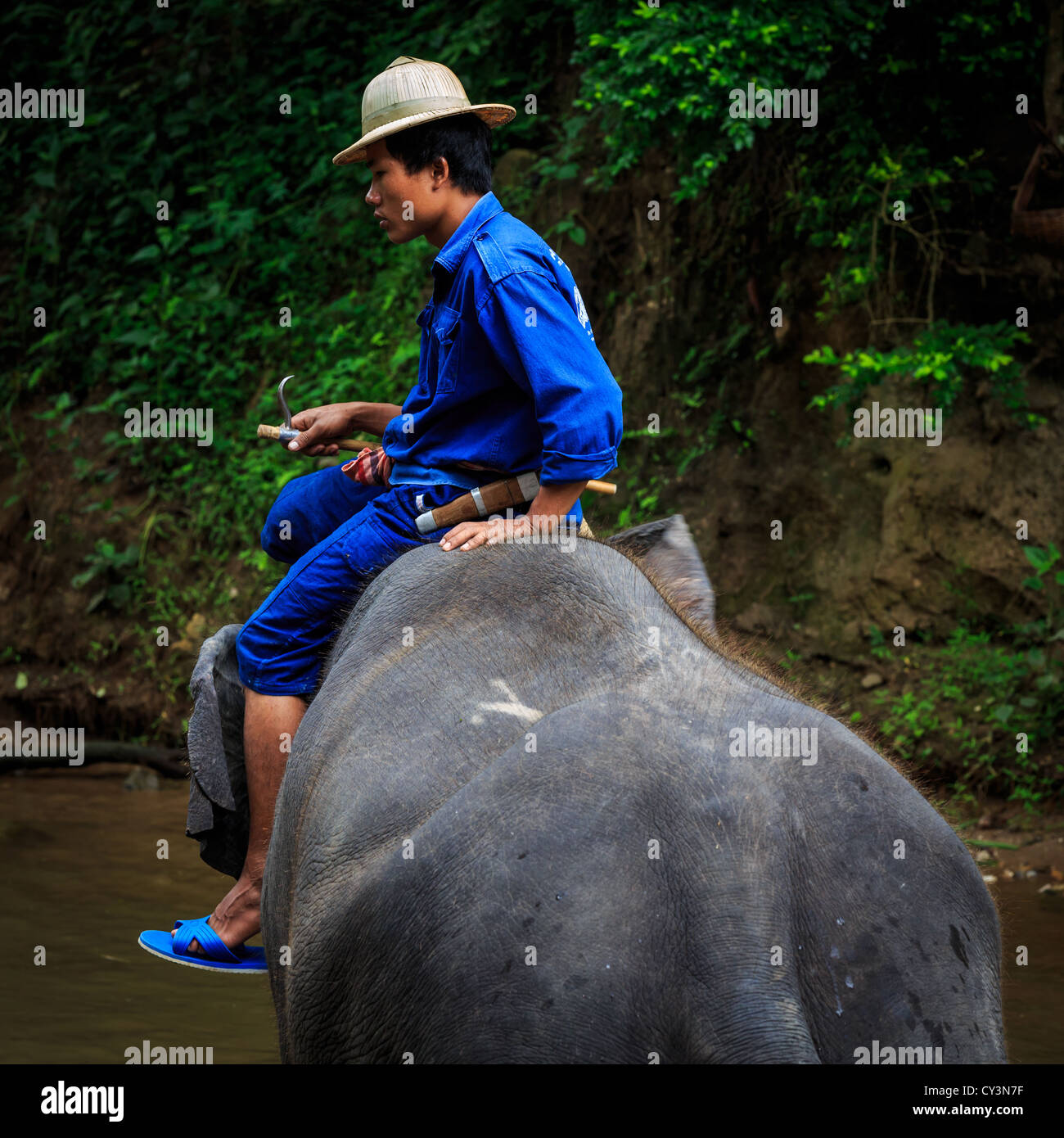 Mahout riding a elephant down to a river for cleaning, Chiang Mai, Thailand - Stock Image