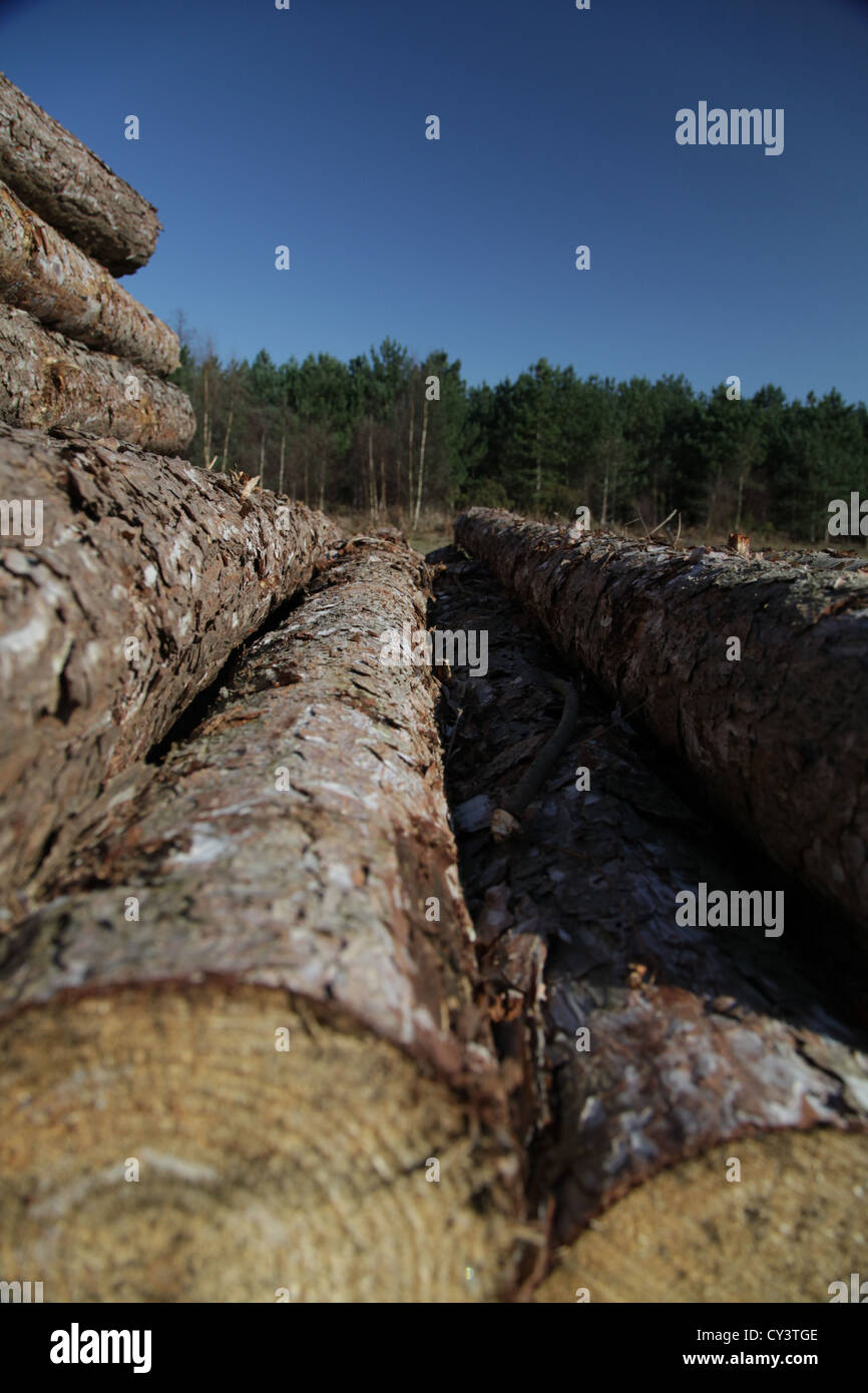 timber, timbers, logs, wood, woods, blue, green, brown - Stock Image
