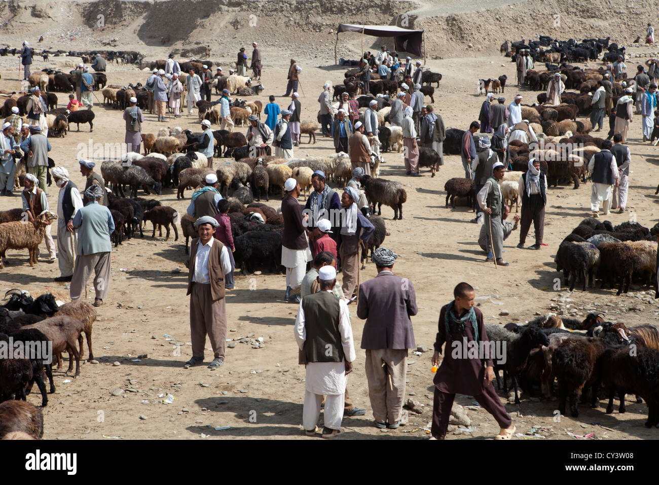 livestock market in kabul, Afghanistan - Stock Image