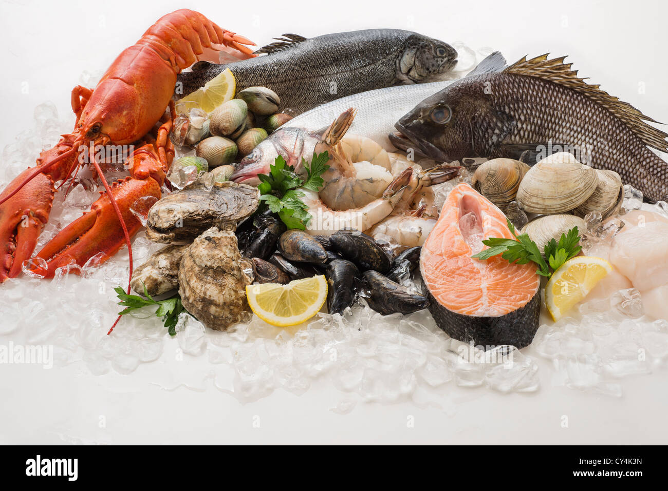 Choice of seefood, Studio shot - Stock Image